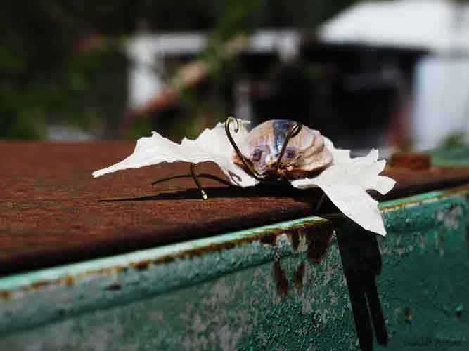 entomologie recyclage et art