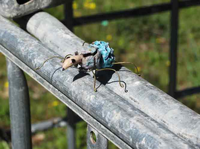 entomologie, recyclage et art